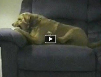 oh !! le chien !!! dans m) VIDEO capturer1