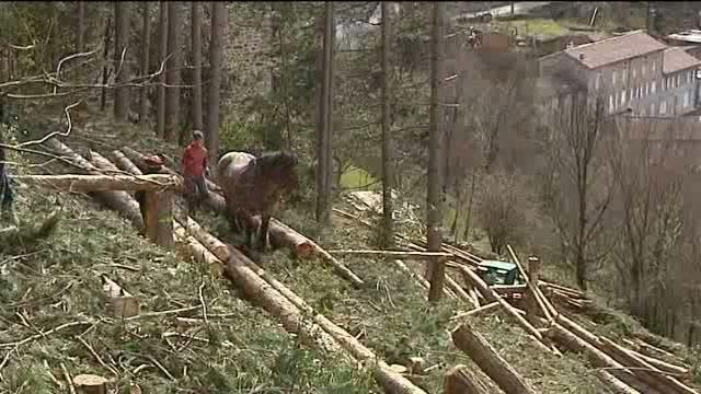 Du débardage à Chirols en Ardèche dans a) L'ARDECHE chirolsdebardage